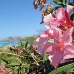 最「幸」の国!南の小島へ【海外旅行のすゝめ#1:フィジー】