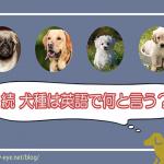 意外と知らない!?犬種は英語でどう書くの? Part.2